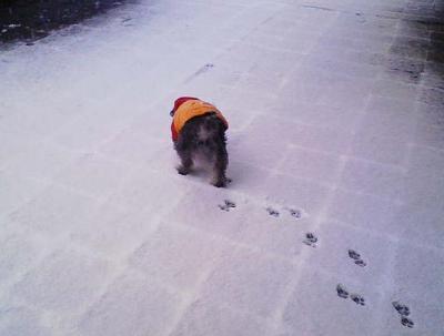 2008 2 3 1s 待ってましたぁ~雪~
