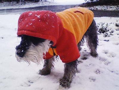 2008 2 3 3s 待ってましたぁ~雪~