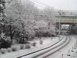 2008 2 3 5s 待ってましたぁ~雪~