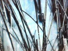 2008 4 2 4s シャンプー後の毛穴