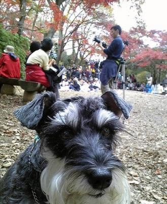 2009 11 24 6s 高尾山の紅葉。続き。