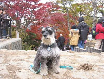 2009 11 24 7s 高尾山の紅葉。続き。
