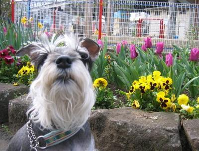 2009 4 2 1s 春・春・春