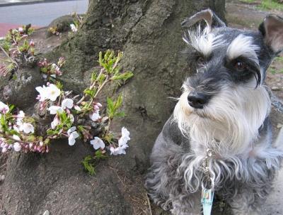 2009 4 2 2s 春・春・春