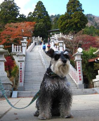 2010 12 1 8s 丹沢大山国定公園の大山に登った 1