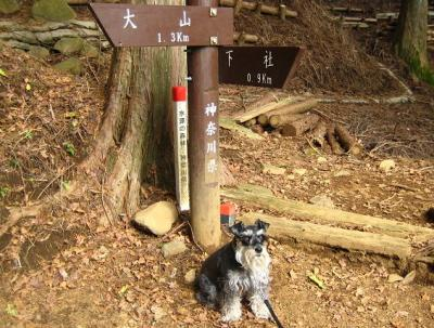 2010 12 2 3s 丹沢大山国定公園の大山に登った 2