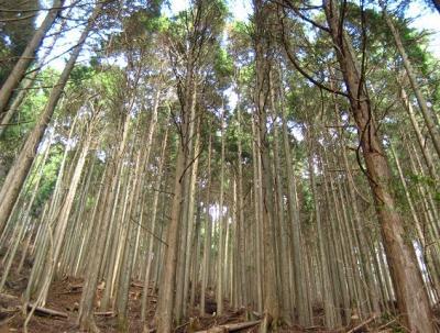 2010 12 2 4s 丹沢大山国定公園の大山に登った 2
