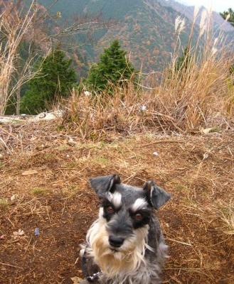2010 12 3 2s 丹沢大山国定公園の大山に登った 3