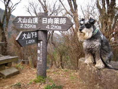 2010 12 3 3s 丹沢大山国定公園の大山に登った 3