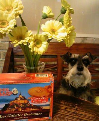 2010 4 21 3s お客さんからの頂き物は花とクッキー