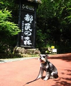 2012 7 11 2 246x300 都民の森へ行ってきた!!2012