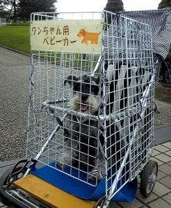 2012 9 23 1 246x300 浜松のフラワーパークで初体験