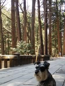 2014 5 28 1 225x300 榛名神社へ行ってきた。