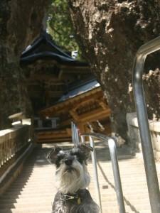 2014 5 28 2 225x300 榛名神社へ行ってきた。