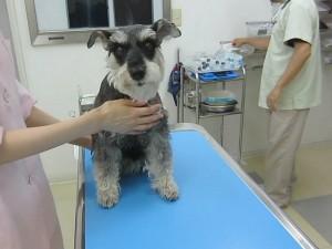 2014 7 8 1 300x225 狂犬病予防接種をやっとした!!!