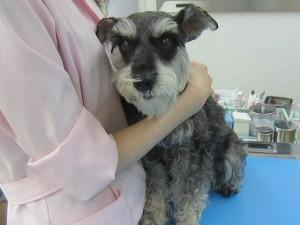 2014 7 8 5 300x225 狂犬病予防接種をやっとした!!!