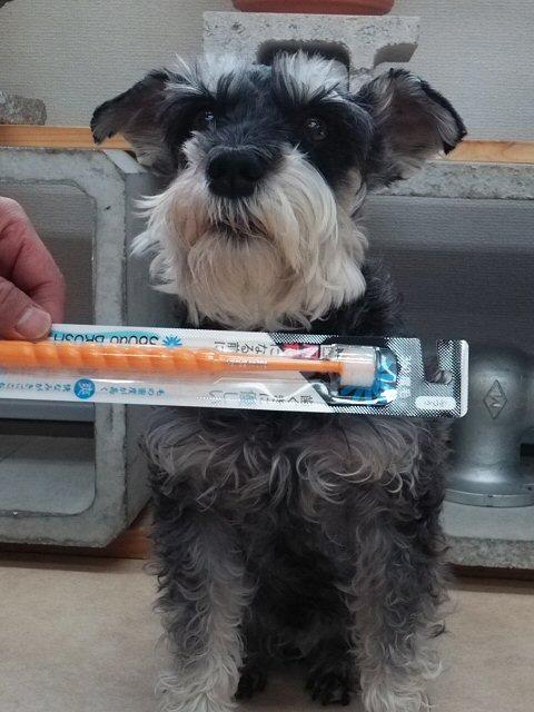 2014 12 15 1 歯ブラシをもらった・・・