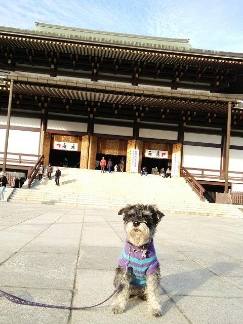 2015 12 22 3 成田山に行ってきた